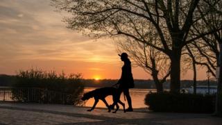 犬 しつけ トレーニング